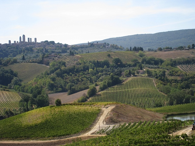 A vineyard on the Tuscany tour